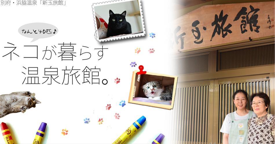 クラウドファンディングでミルクちゃんの「新玉旅館」の保護猫たちの命を守りたい